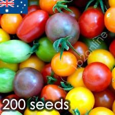 Heirloom Tomato Seeds x200 Cherry Tomato Mix Seed Lycopersicon Esculentum Rare