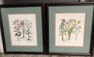 "2 FLORAL BOTANICAL FLOWER ART PRINT  Framed set matching 17 1/2""x 15 3/4"""