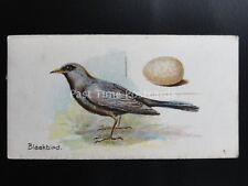 No.35 BLACKBIRD - Birds & Eggs by Lambert & Butler 1906