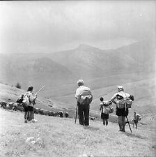 BEUIL c. 1950 - Randonneurs  Bétail  Alpes Maritimes - Négatif 6 x 6 - N6 PROV3