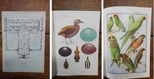 RIO - Rivista Italiana Di Ornitologia - 1939 - 1