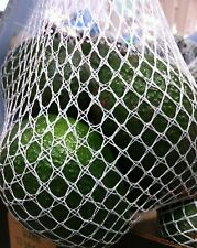 Fresh Organic Avocados - 6 Count Bag