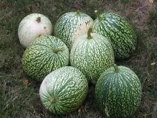 50 ROUND ZUCCHINI SUMMER SQUASH Vegetable Seeds + Gift