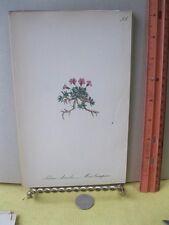 Vintage Print,MOSS CAMPION,Wild Flower Great Britain,1863-66,Gower+Smith