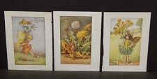 Flower Fairies Cicely M. Barker 3 Prints  c1940 G1#11