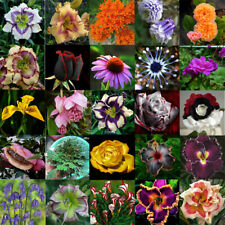 Lots Mixed Rose Carnation Daisy Bulbs Seeds Spring Plant Flower Home Garden