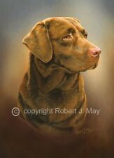 Chocolate Labrador Retriever Limited Edition Print by Robert J. May