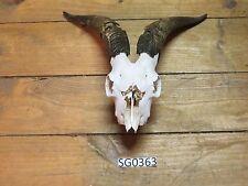 texas goat skull hillcountry sg0363