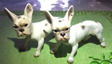 Austria Augarten Wien rare adorable French Bulldog figurine # 31 OR # 76
