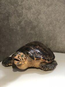 Taxidermy Green sea turtle