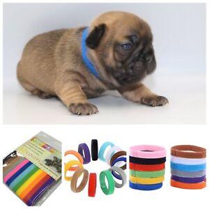 12 Whelp ID Collars/Bands, Newborn Puppy, Kitten, For Breeders, 20cm x 1cm