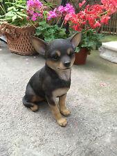 Chihuahua , Dog small Chihuahua black