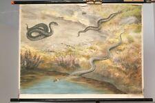 Schulwandkarte Role Map Wall Chart Viper Grass Snake Tiren