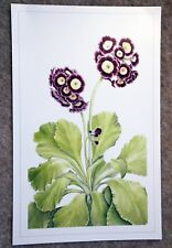 Beautiful botanical limited edition signed print 'Primula Auricula' by Ann Swan