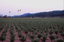 738036 Three Palms Vineyard Napa Valley California USA A4 Photo Print