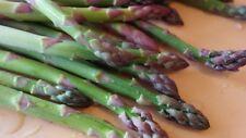 Mary Washington Asparagus Seeds, NON-GMO, Healthy Vegetable, FREE SHIPPING