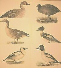 ** COLLECTION OF 6 COLOUR 1950s VINTAGE BIRD PRINTS * BY E DEMARTINI