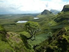 Scotland Trees Mountain Landscape Nature HD POSTER