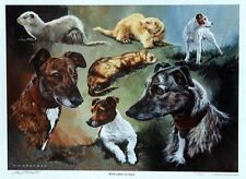 """Prints, hunting dogs and ferrets """"With Rabbits in Mind"""" by the late Vic Granger"""