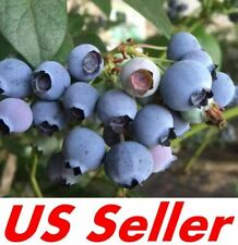 100 Seeds Blueberry Seeds E10.2, Blue Berry Fruit Bush Seeds - Us Seller
