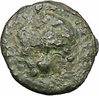 CHERSONESOS in THRACE 386BC RARE Ancient Greek Coin Lion Barley Grain i47286