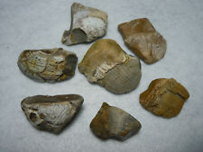 Fossils In Quartz Chalcedony Flint Stone Lot Of 7 Kansas USA 129 Grams Total