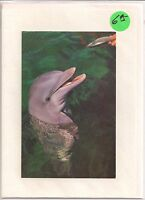 FLIPPER CALLING ALL DOLPHINS! COLLECTIBLE postcard on BLANK card Vintage photo