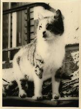 PHOTO ANCIENNE - VINTAGE SNAPSHOT -ÉTRANGE ANIMAL CHAT REGARD - CAT LOOK STRANGE