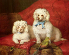 Art Oil painting beautiful two Poodle dogs with birds feather Hand painted art
