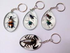 Stunning Jurasic Technich Insect in The Glass Cute & Beautiful Key Chain Gift