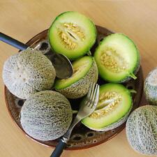 Melon Eden's Gem Early Maturing All Time Favorite Sweet 25 SEEDS