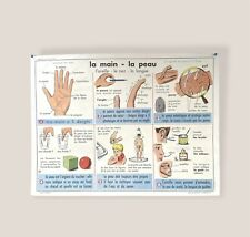More details for vintage french school poster, biology poster, double sided, 1960s 91cm x 68cm