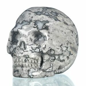 """1.97""""Natural Black Crazy Lace Agate Carved Skull  Healing #33M36"""