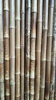 Tigerbambus Bambusrohr 6-7 cm 2m Bambusrohre Bambusstange Bambusstangen Bambus