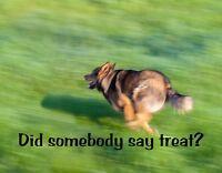METAL FRIDGE MAGNET Dog Never Wake Up Doesn/'t Love You Belgian Shepherd Humor