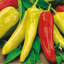 Hungarian Sweet Banana Pepper Seeds 500 Heirloom Organic Non GMO Bulk Fresh 2018