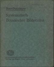 Boas-Dunzinger - Systematisch - Botanischer Bilderatlas