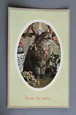 R&L Postcard: Tommy the Masher Tom Cat in Floral Necklace, H V & Co London