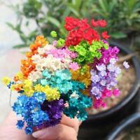 30Pcs Natural Dried Flowers Flower Bouquet Wedding Party Floral Home Decor G1J4
