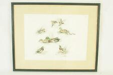 LAURE D'AMBRIERES - Illustration canards colsverts 2 - Peintre animalier - Signé
