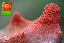 Natural Safe RED SPIDER MITE KILLER 70g POWDER Fruit Flowers Hydroponics SHIELD