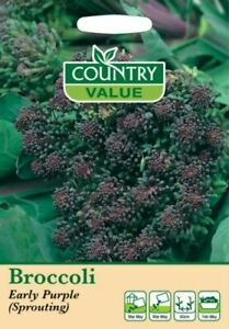Broccoli Early Purple Sprouting Seeds (400) Country Value by My Fothergill's