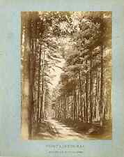 France, Fontainebleau. Forêt de Pins Dorés  Vintage albumen print.  Tirage alb