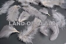 400+ Gray turkey feathers loose small feathers plumage grey feather bulk 2 oz