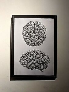 Brain Human Anatomy drawing Print Poster Science Neurology Medical Doctor signed
