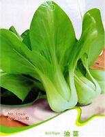 FD1217 Bird Rape Seed Brassica Campestris Organic Vegetable ~1 Pack 200 Seeds~