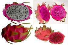 1 RED+1 WHITE+1 PURPLE DRAGON  FRUIT TREE  PLANT PITAHAYA 9 inch CUTTING+3 in 1
