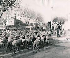 ST MARTIN DE CRAU c. 1950 - Transumance Bouches du Rhône - DIV468