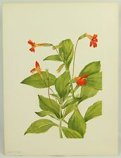 395 CARDINAL MONKEYFLOWER Mary Walcott Flower Vintage 1925 Botanical Art Print