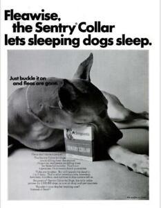 1967 Sergeant's PRINT AD Dog Sentry Flea Collar Great Dane Dog